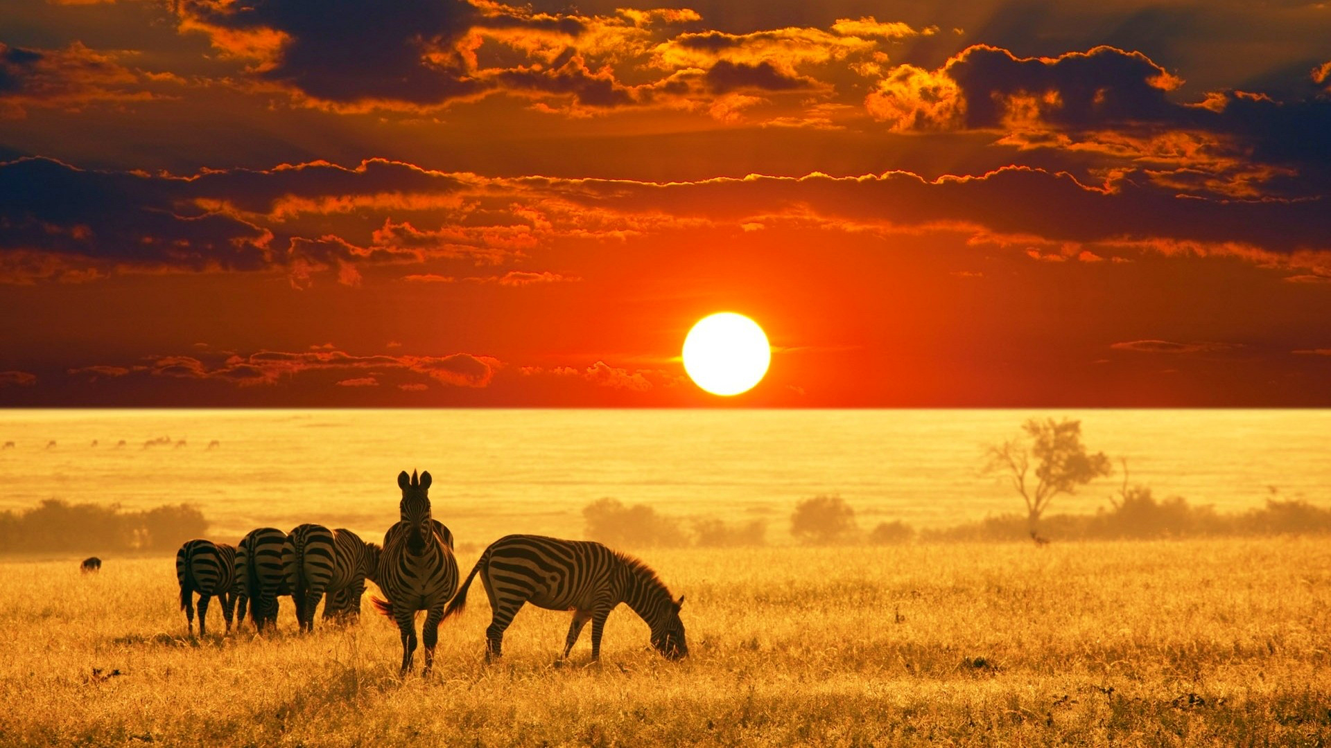 2020 Journey Into Africa - Safari Tour